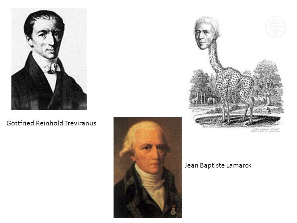 Gottfried Reinhold Treviranus