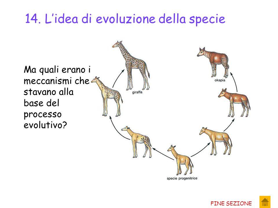 14. L'idea di evoluzione della specie