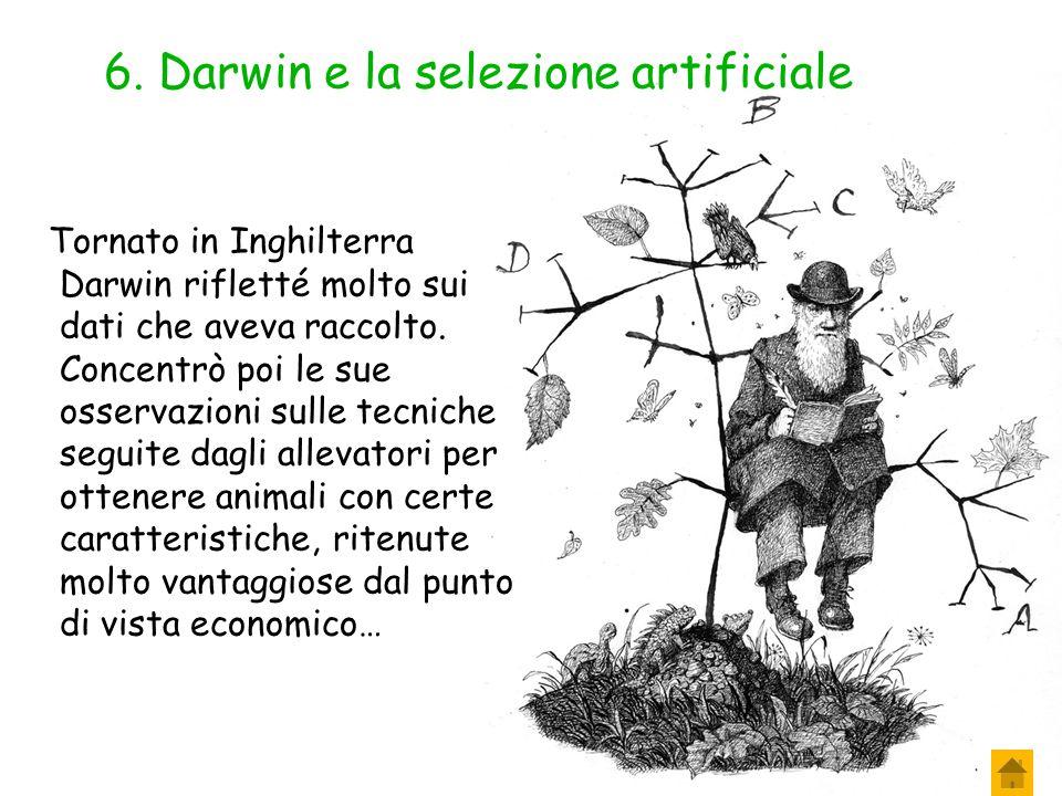 6. Darwin e la selezione artificiale