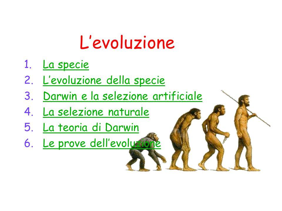 L'evoluzione La specie L'evoluzione della specie