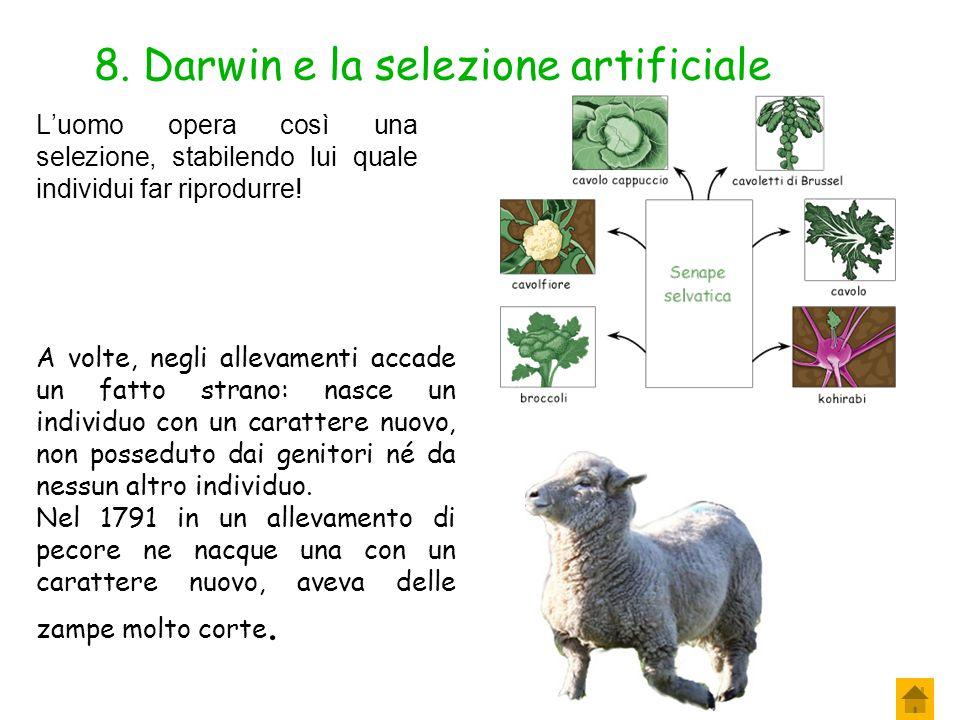 8. Darwin e la selezione artificiale