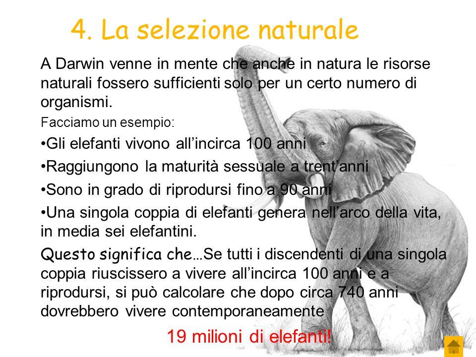 4. La selezione naturale 19 milioni di elefanti!
