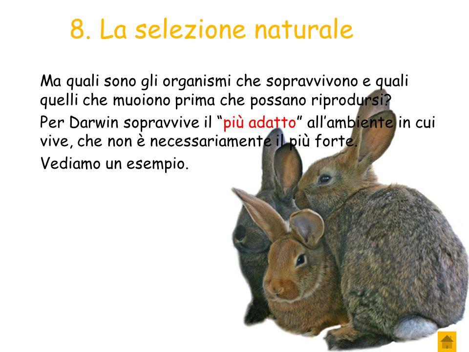8. La selezione naturale Ma quali sono gli organismi che sopravvivono e quali quelli che muoiono prima che possano riprodursi