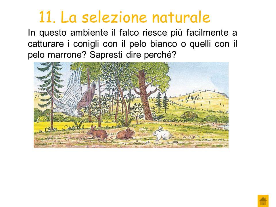 11. La selezione naturale