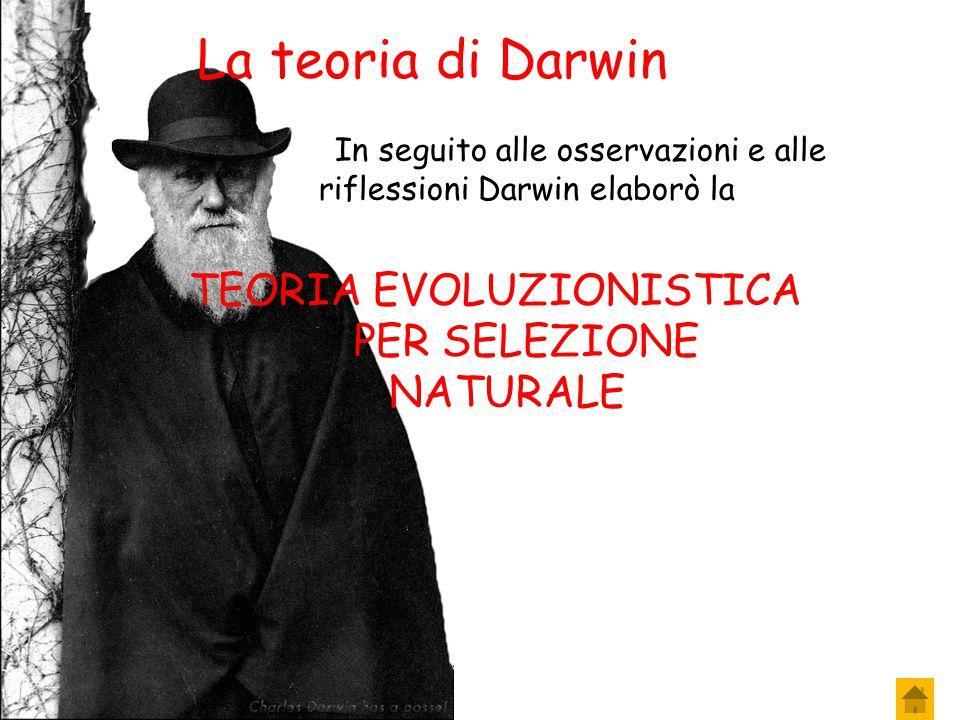 La teoria di Darwin TEORIA EVOLUZIONISTICA PER SELEZIONE NATURALE….