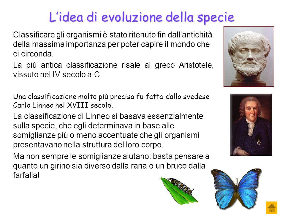 L'idea di evoluzione della specie