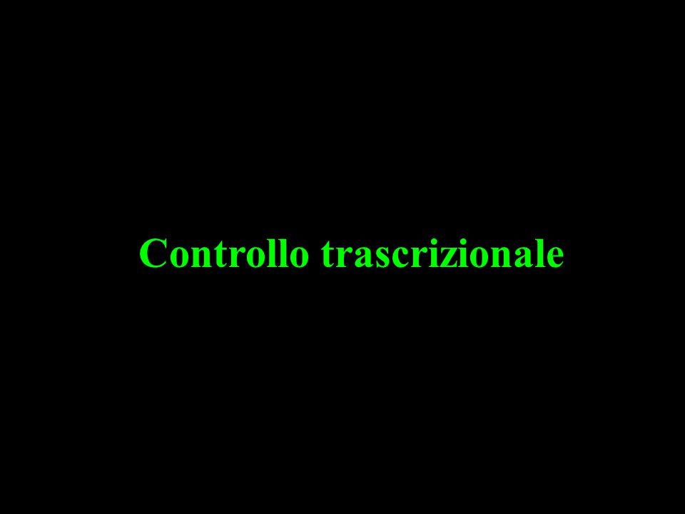 Controllo trascrizionale
