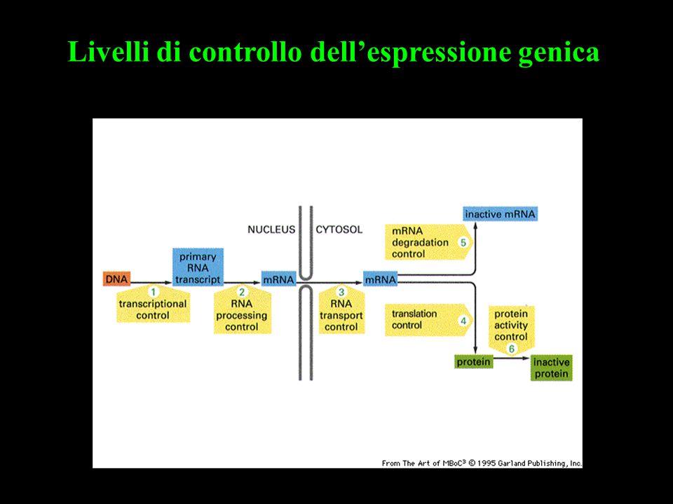 Livelli di controllo dell'espressione genica