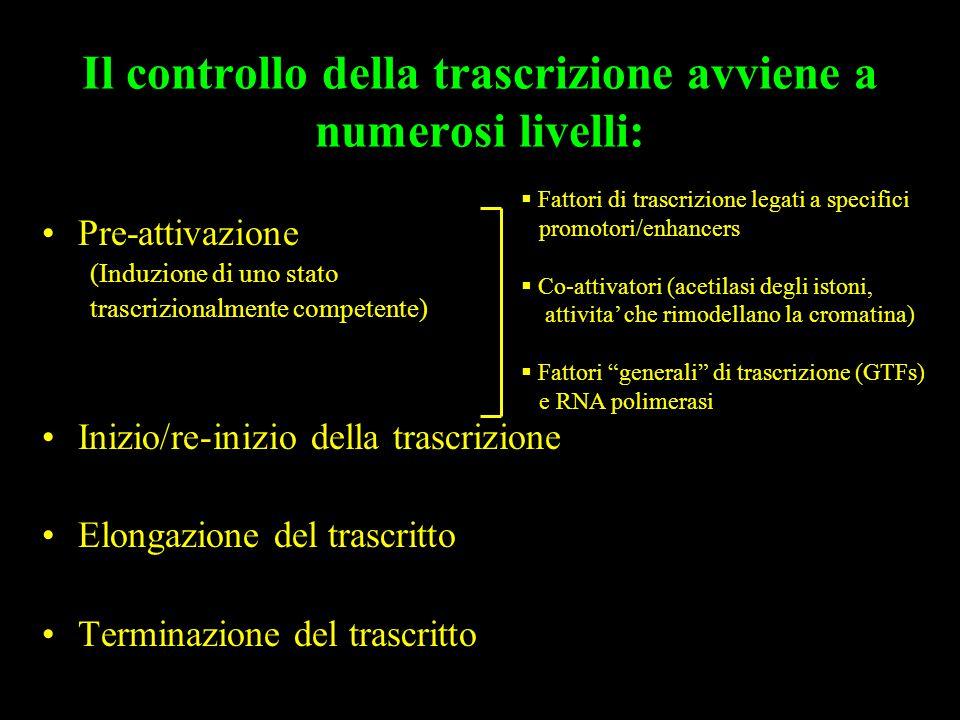 Il controllo della trascrizione avviene a numerosi livelli: