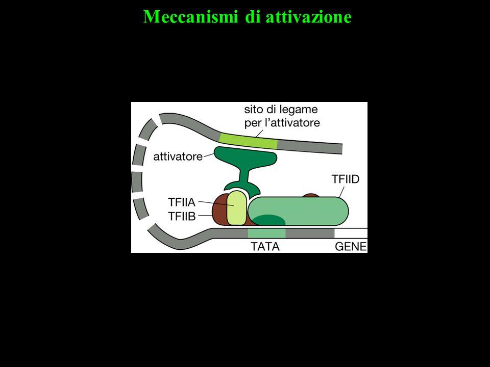Meccanismi di attivazione