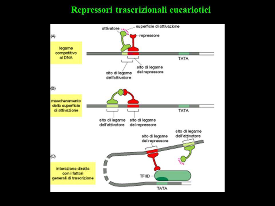 Repressori trascrizionali eucariotici