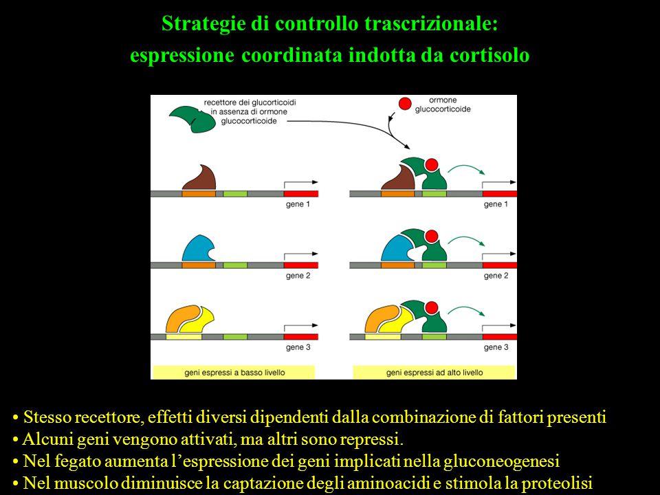 Strategie di controllo trascrizionale:
