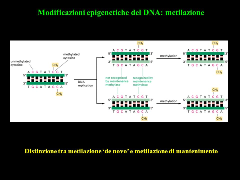 Modificazioni epigenetiche del DNA: metilazione