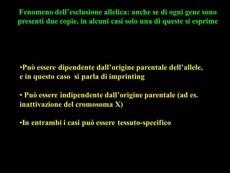 Fenomeno dell'esclusione allelica: anche se di ogni gene sono presenti due copie, in alcuni casi solo una di queste si esprime