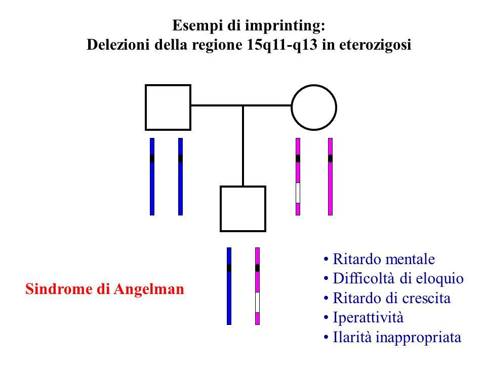Delezioni della regione 15q11-q13 in eterozigosi