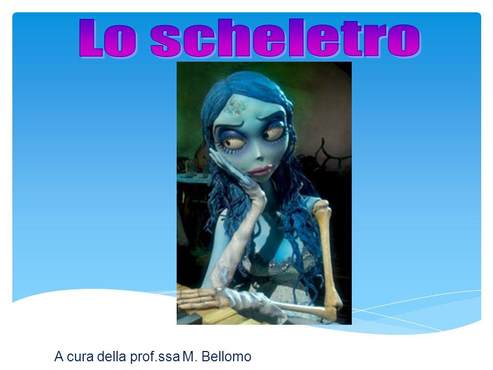 Lo scheletro A cura della prof.ssa M. Bellomo