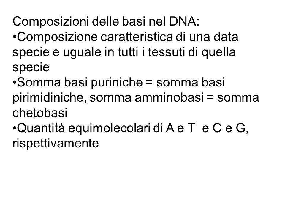 Composizioni delle basi nel DNA: