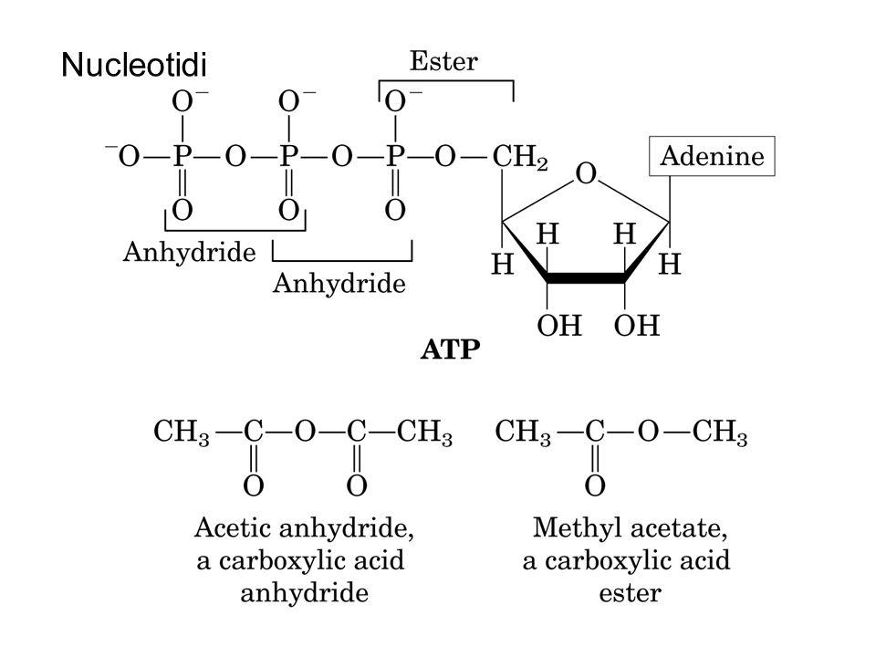 Nucleotidi