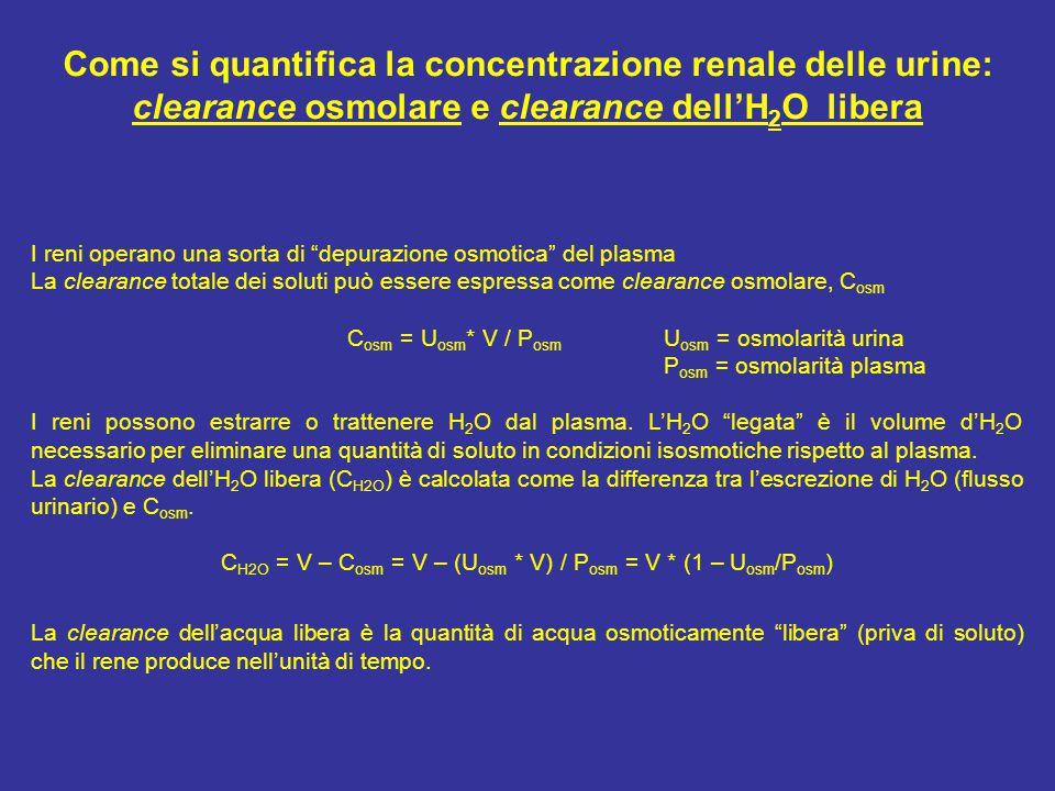 Come si quantifica la concentrazione renale delle urine: