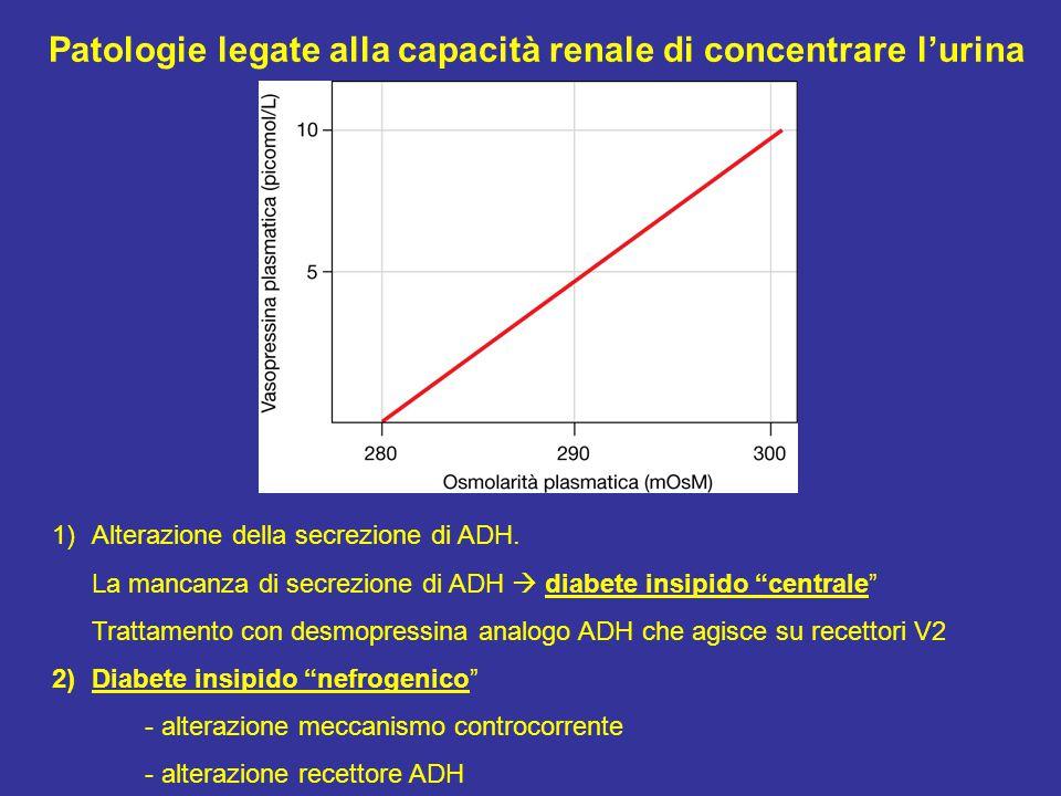 Patologie legate alla capacità renale di concentrare l'urina