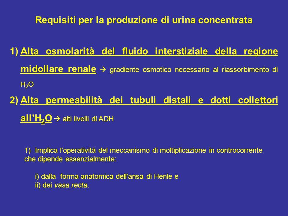 Requisiti per la produzione di urina concentrata