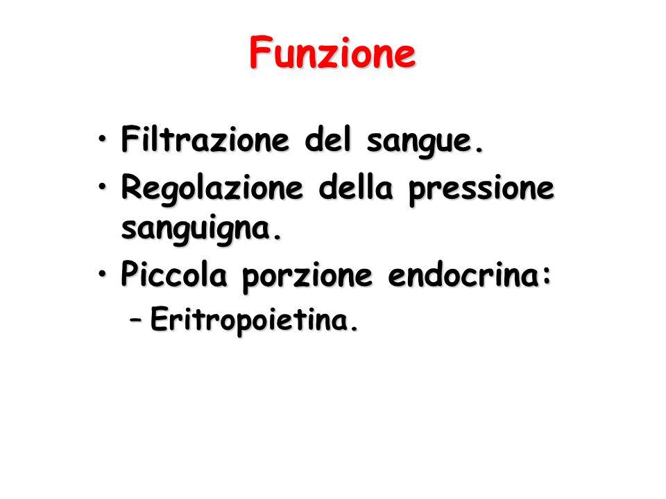 Funzione Filtrazione del sangue.