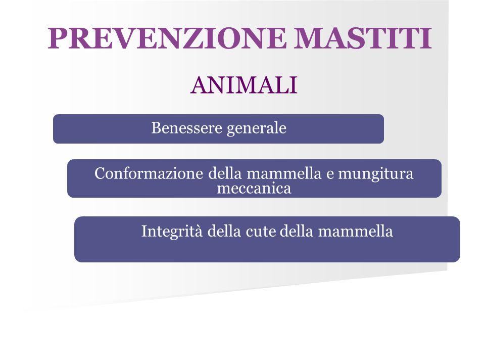 PREVENZIONE MASTITI ANIMALI Benessere generale