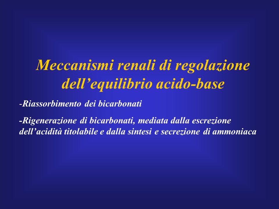 Meccanismi renali di regolazione dell'equilibrio acido-base