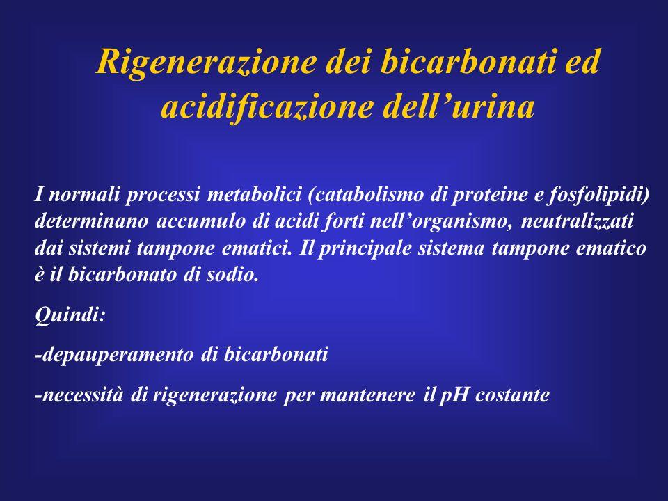 Rigenerazione dei bicarbonati ed acidificazione dell'urina