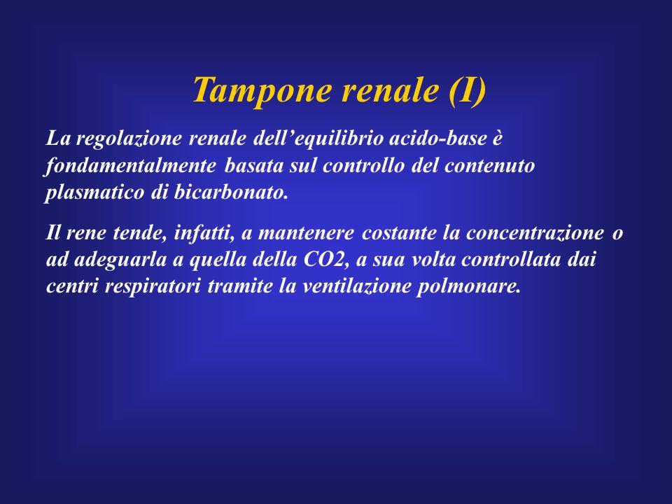 Tampone renale (I) La regolazione renale dell'equilibrio acido-base è fondamentalmente basata sul controllo del contenuto plasmatico di bicarbonato.