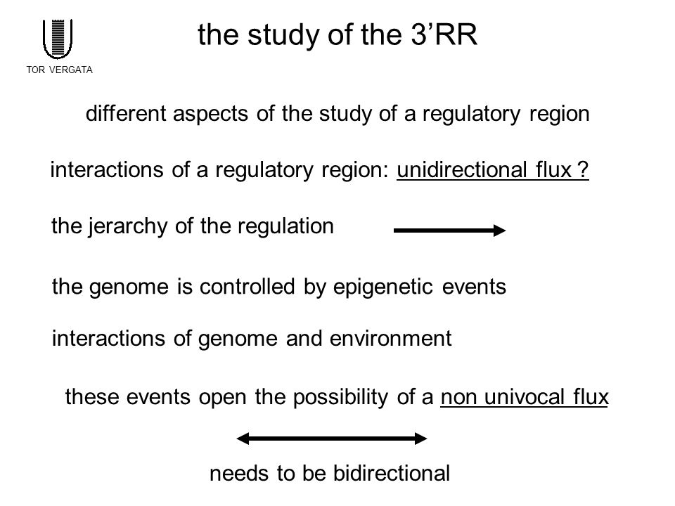 the study of the 3'RR TOR VERGATA. different aspects of the study of a regulatory region.