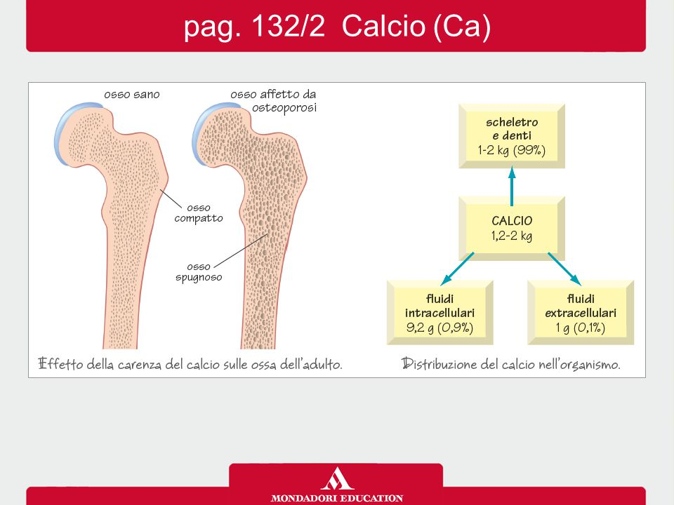 pag. 132/2 Calcio (Ca)