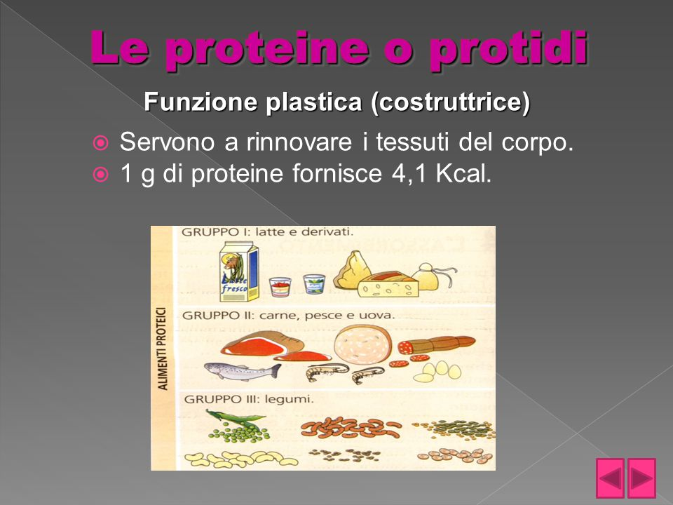 Funzione plastica (costruttrice)