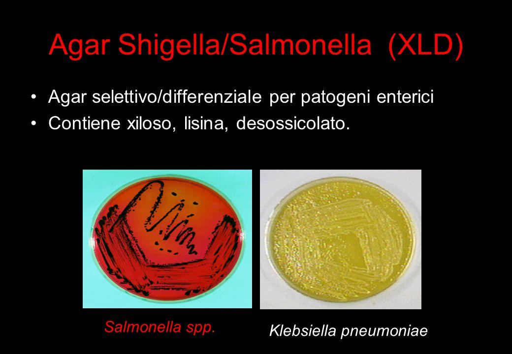 Agar Shigella/Salmonella (XLD)