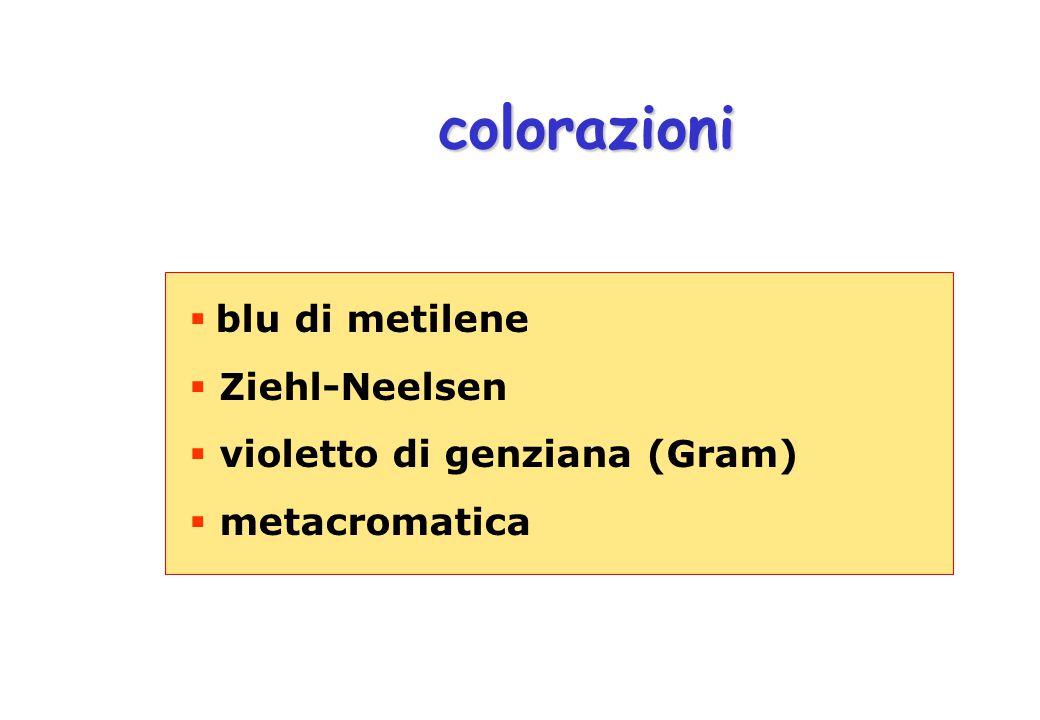 colorazioni blu di metilene Ziehl-Neelsen violetto di genziana (Gram)