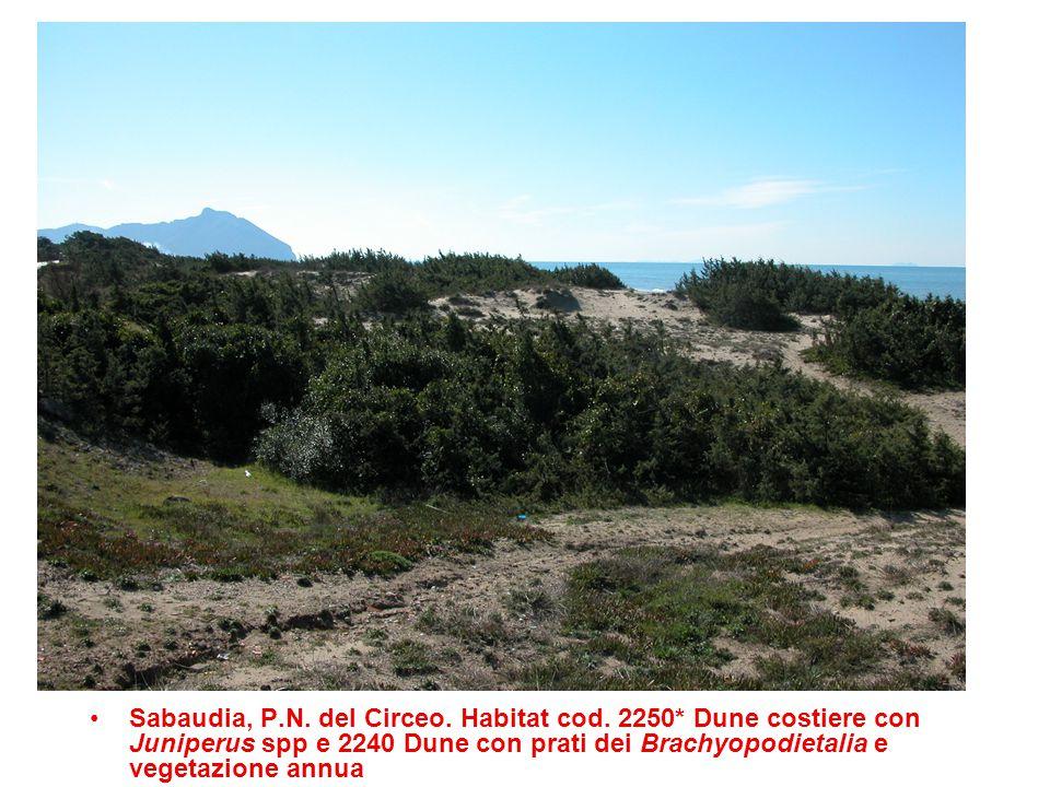 Sabaudia, P. N. del Circeo. Habitat cod. 2250