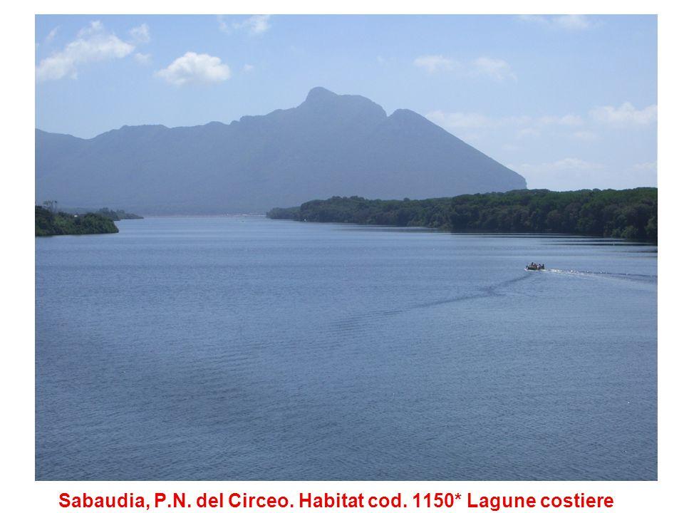 Sabaudia, P.N. del Circeo. Habitat cod. 1150* Lagune costiere