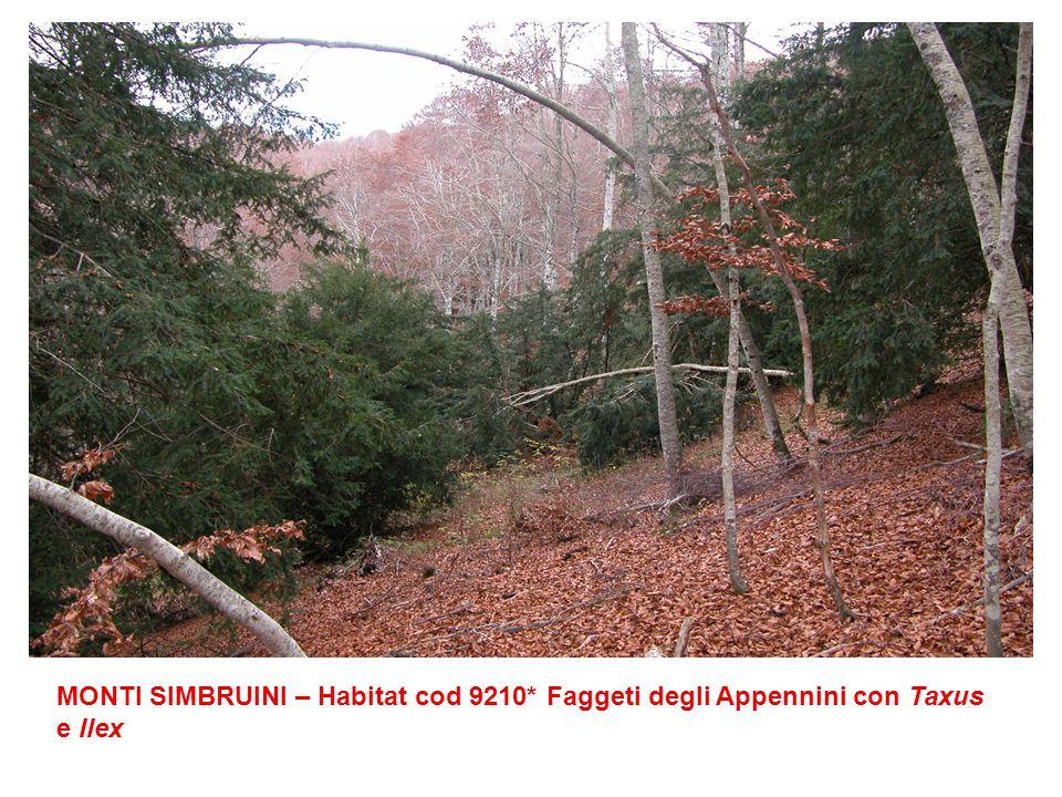 MONTI SIMBRUINI – Habitat cod 9210