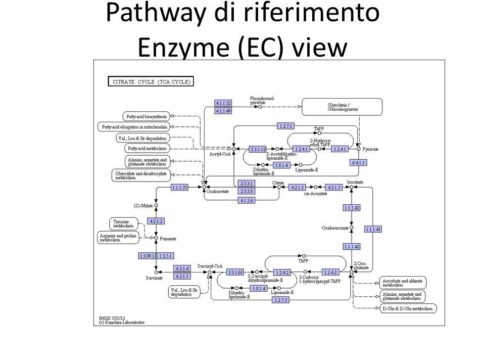 Pathway di riferimento Enzyme (EC) view