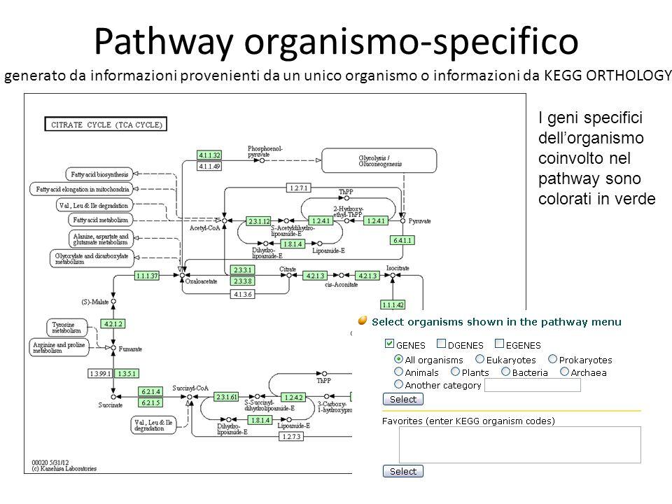 Pathway organismo-specifico