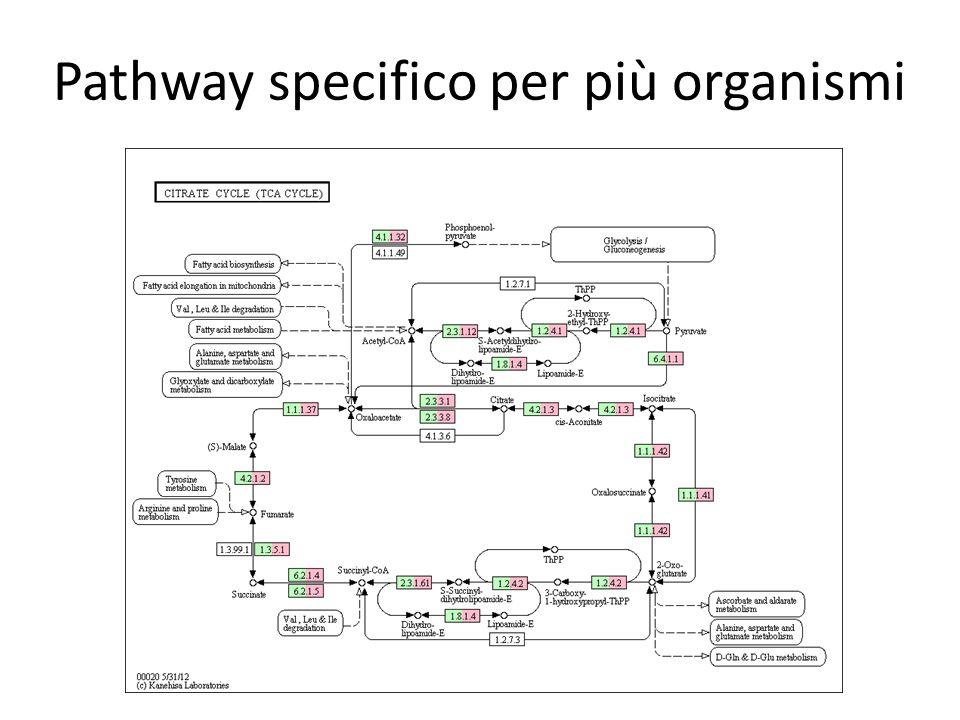 Pathway specifico per più organismi