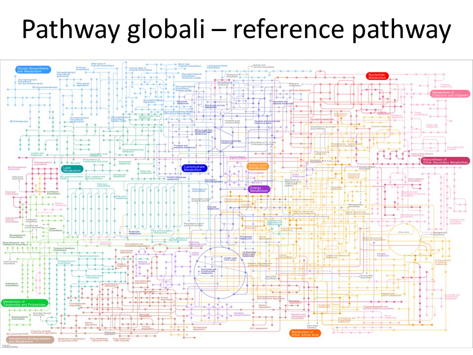 Pathway globali – reference pathway