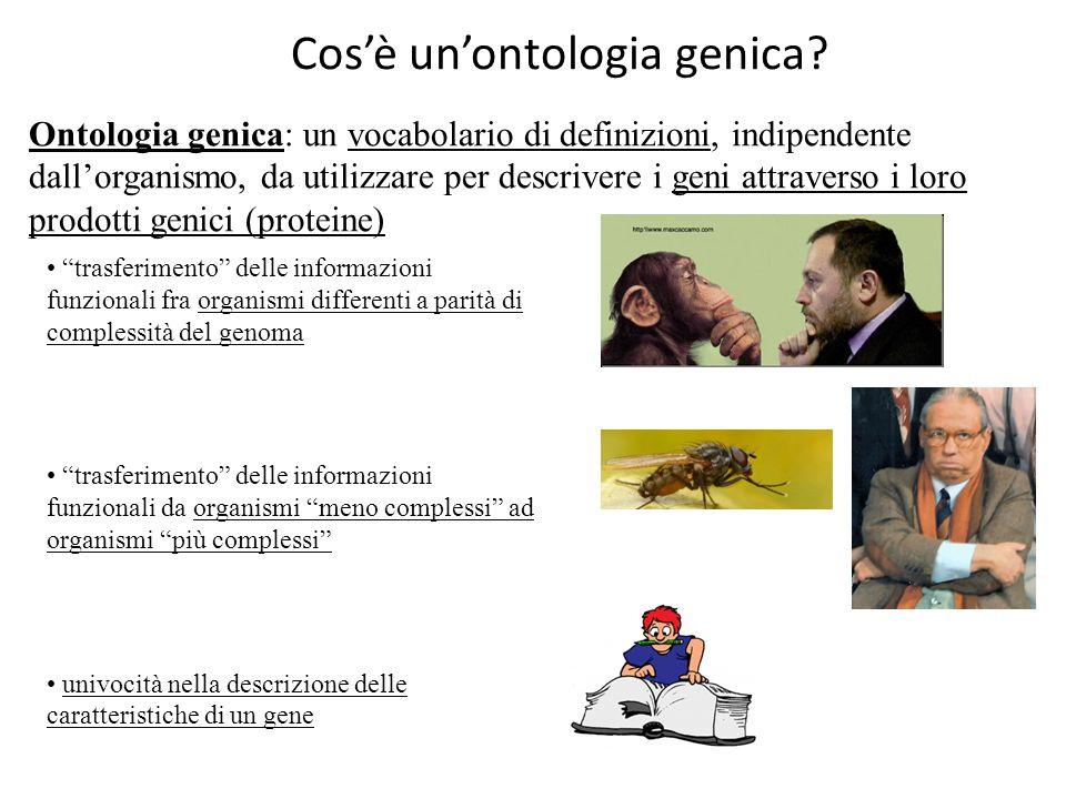Cos'è un'ontologia genica