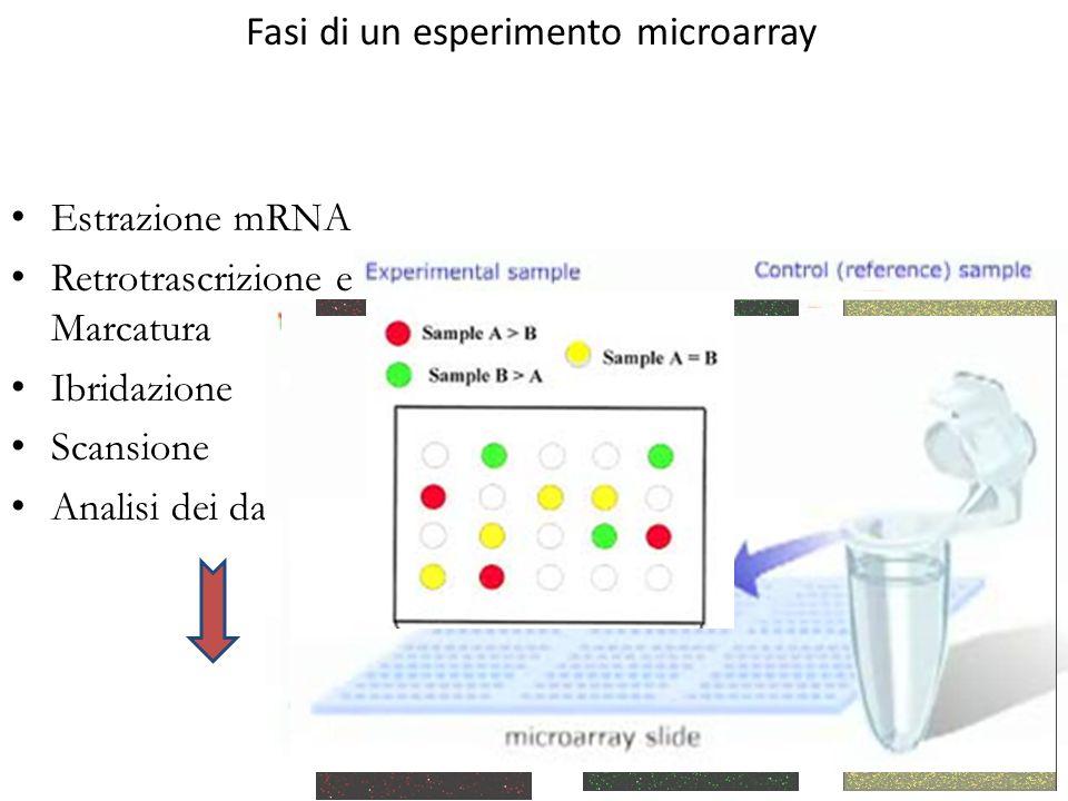 Fasi di un esperimento microarray