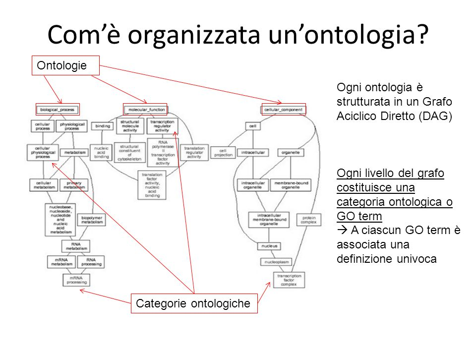 Com'è organizzata un'ontologia