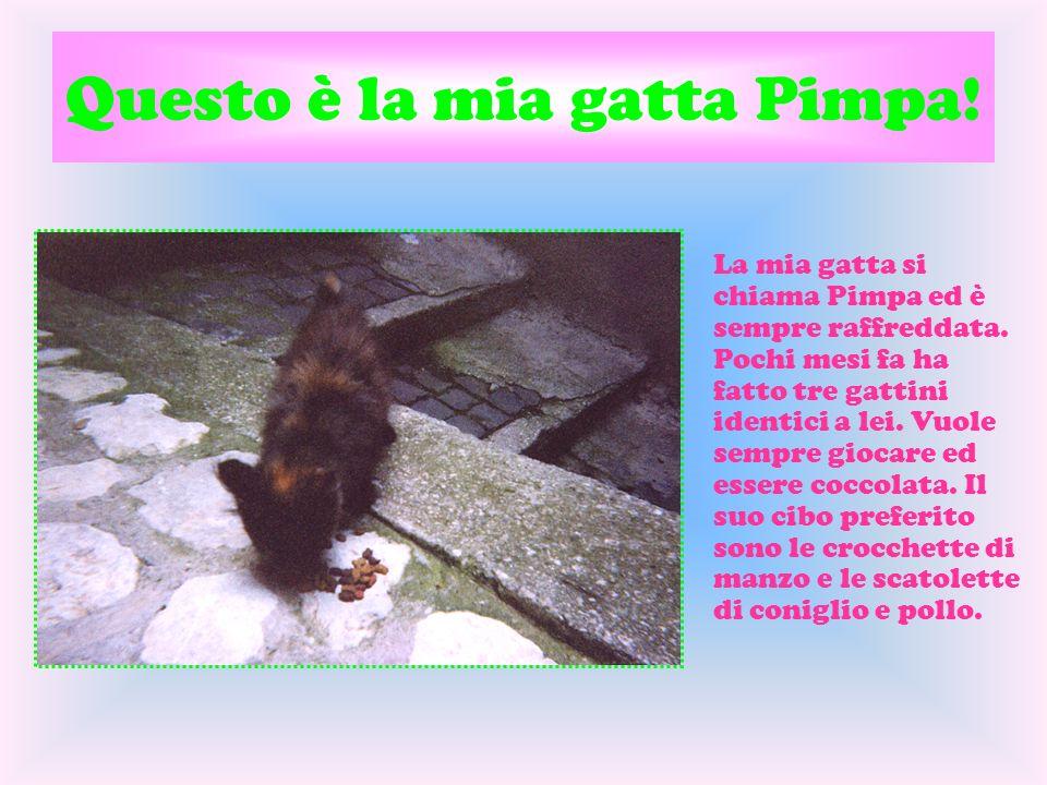 Questo è la mia gatta Pimpa!