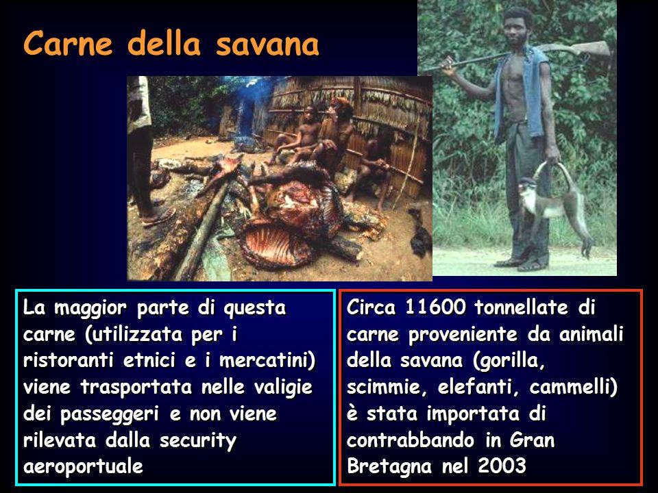 Carne della savana