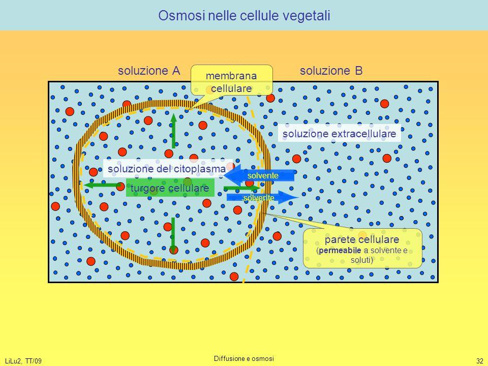 Osmosi nelle cellule vegetali