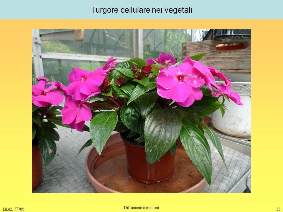 Turgore cellulare nei vegetali