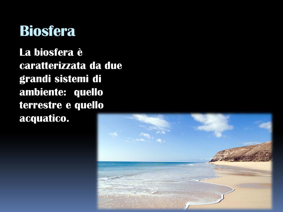 Biosfera La biosfera è caratterizzata da due grandi sistemi di ambiente: quello terrestre e quello acquatico.